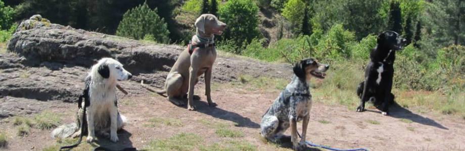 Education du chien de compagnie